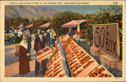 Typical Boulevard Scene in the Orange Belt Postcard