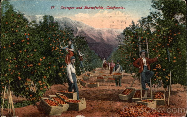 Oranges and Snowfields California