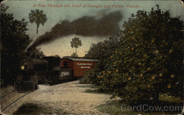 A trip through the land of oranges and palms Florida