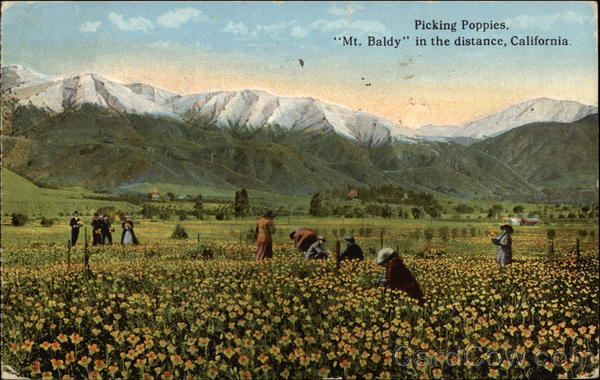 Picking Poppies, Mt. Baldy in the Distance Scenic California