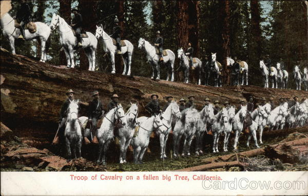 Troop of Cavalry on a fallen big tree California
