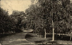 A drive among the birch, City Park