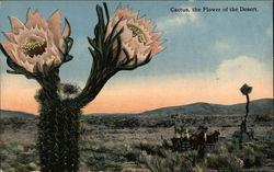 Cactus - The Flower of the Desert