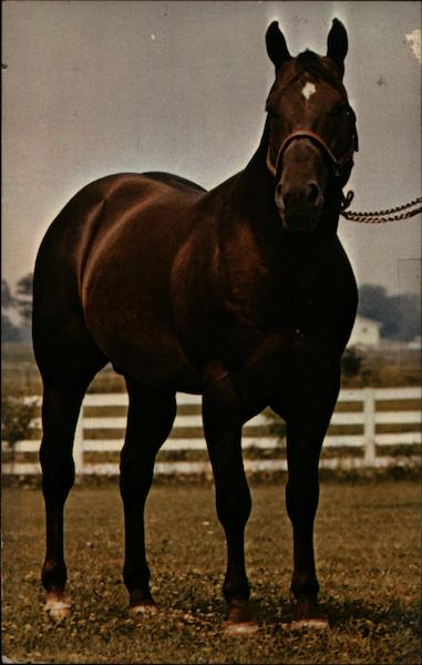 Major's Wimpy 181,013 Darol Dickinson Horses