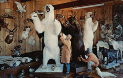 Knopp Brothers Taxidermy Studios