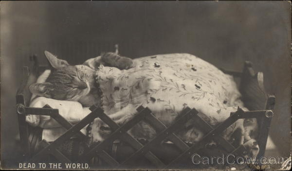 Dead to the World - Cat in a Bed Cats