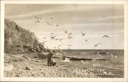 Seagulls Near Grand Marais