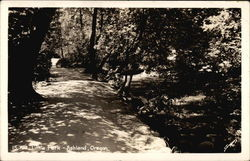 Tree-lined Path, Lithia Park