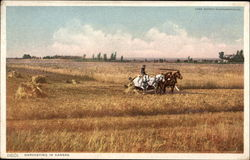 Harvesting in Kansas