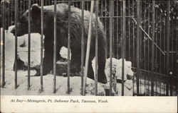 Bear at Menagerie, Point Defaince Park