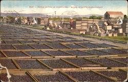 Prune Drying in California