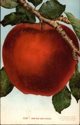 Big Red Apple, With Branch and Leaves