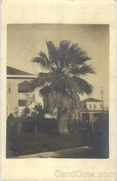 Large Palm Tree in Yard Buildings