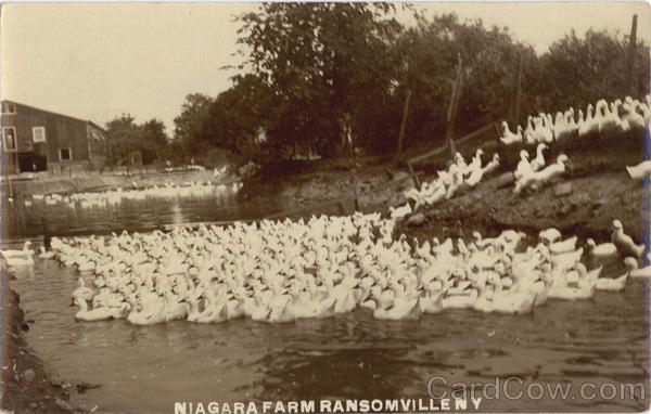 Niagara Farm Ransomville New York