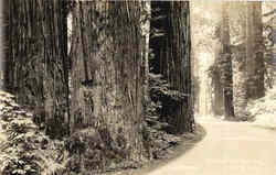 The Redwood Highway