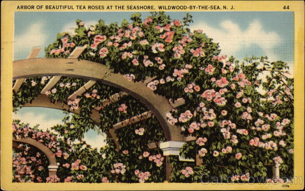 Arbor of Beautiful Tea Roses at the Seashore Wildwood-by-the-Sea New Jersey