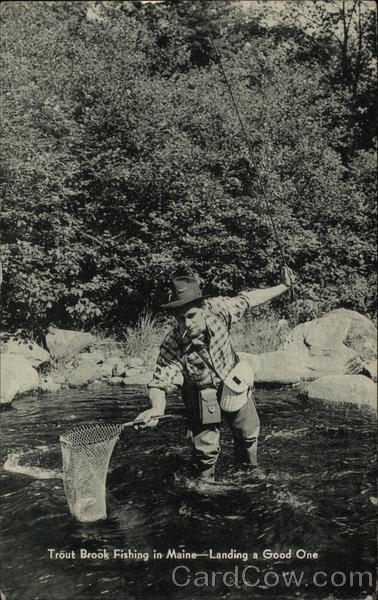 Trout Brook Fishing in Maine - Landing a Good One