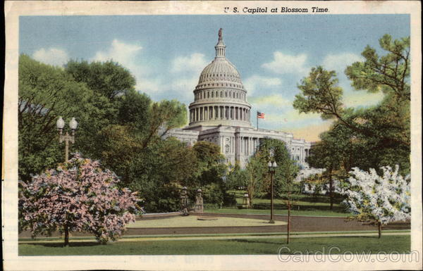 U.S. Capitol at Blossom Time Washington District of Columbia