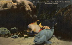A Scene in the 7-Ton Coral Reef at Marine Studios Postcard