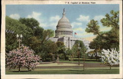 U.S. Capitol at Blossom Time