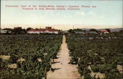 Panoramic View of the Italian-Swiss Colony's Immense Winery and Vineyard
