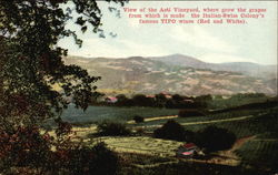 View of Asti Vinyard