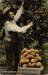 Gathering Peaches
