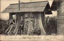 Cedar Stump House