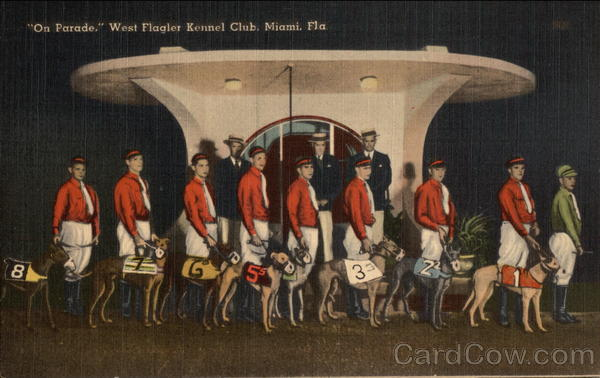 On Parade, West Flagler Kennel Club Miami Florida