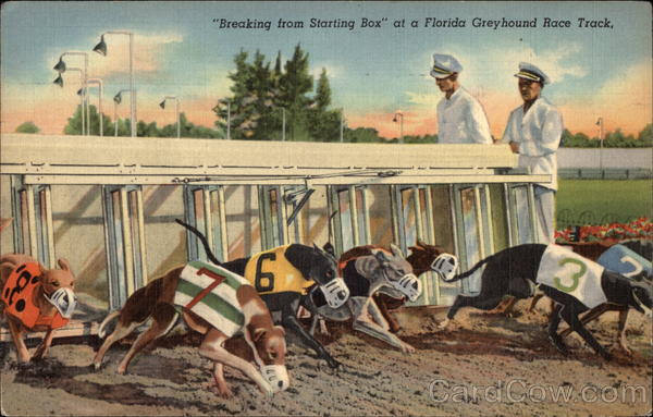 Breaking from Starting Box - Greyhound Racing Florida