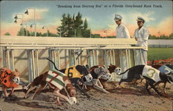 Breaking from Starting Box - Greyhound Racing