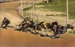 On the Turn at Miami Beach Dog Track
