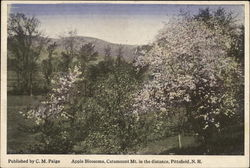 Apple Blossoms, Catamount Mt. in the distance