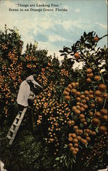 """Things are Looking Fine"" Scene in an Orange Grove"