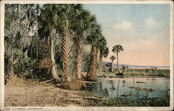 A Florida Landscape View