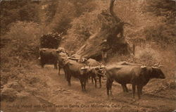 Hauling Wood with Oxen Team