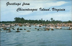 Greetings from Chincoteague Island, Virginia