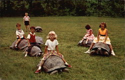 Children Riding Giant Tortoises at Catskill Game Farm