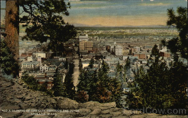 A Glimpse of the City throuth the Pines Spokane Washington