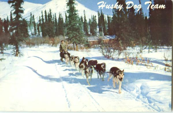 Alaska Husky Dog Team Scenic