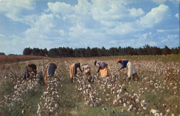 Cotton Picken Time In The South Black Americana
