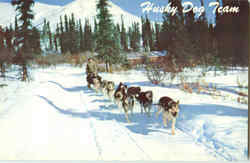 Alaska Husky Dog Team