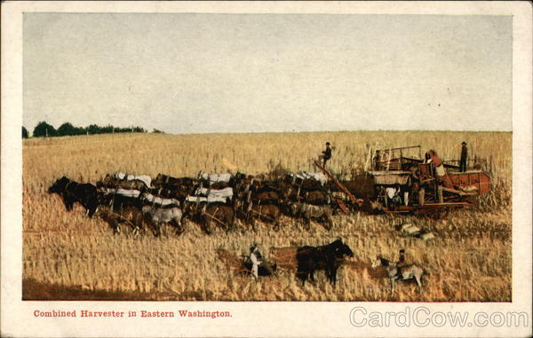 Combined Harvester in Eastern Washington