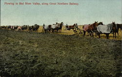 Plowing in Red River Valley, along Great Northern Railway