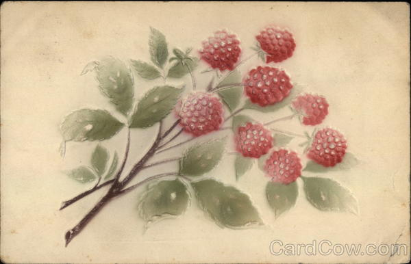 Branch of Raspberries Fruit Airbrushed
