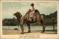 Riding Animals, Camel, New York Zoological Park