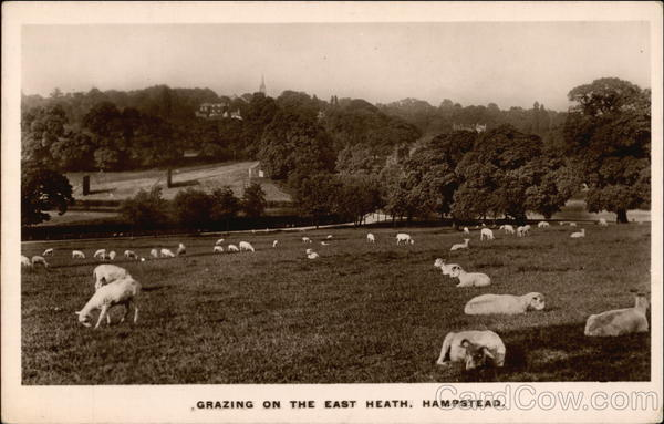 Grazing on the East Heath Hampstead United Kingdom