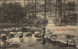 Endcliffe Woods - The Stepping Stones