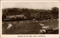 Grazing on the East Heath