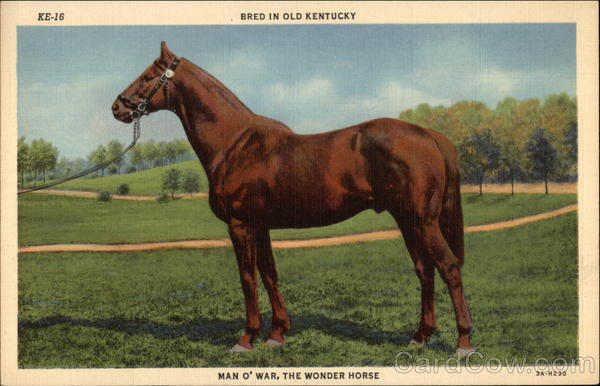 Bred in Old Kentucky, Man O' War, The Wonder Horse